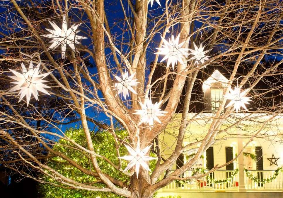 Holiday lights shining in tree in front of house with siding